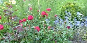 rosenbeet_600x300